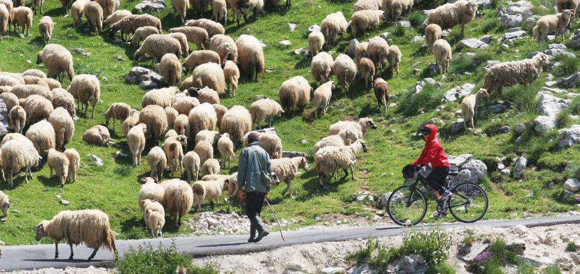 montenegro-tour-biking-banner