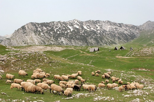 Wild and pristine nature of Montenegro.