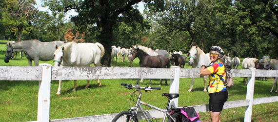 activities-slovenia-horseback-riding