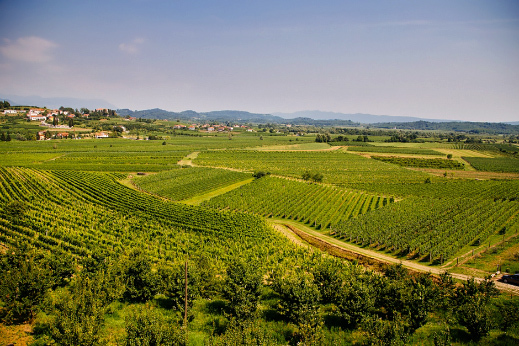 Rolling hills of Brda wine region, culinary slovenia tour