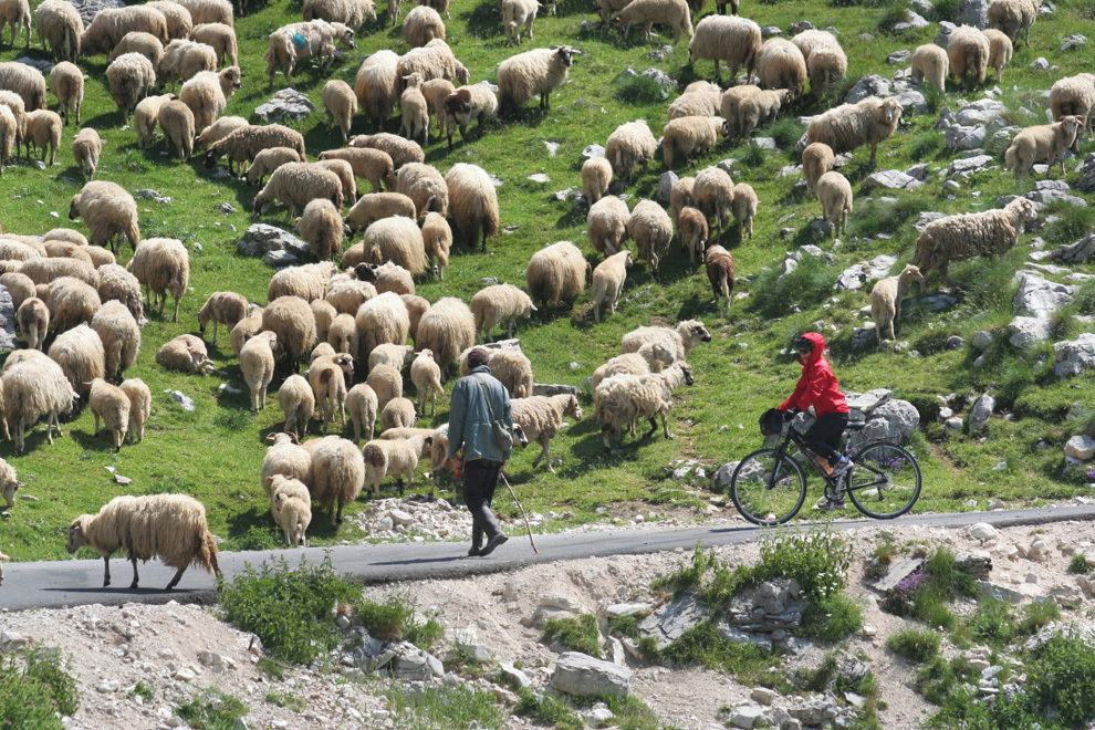 Biking Montenegro, simple life of a shepherd
