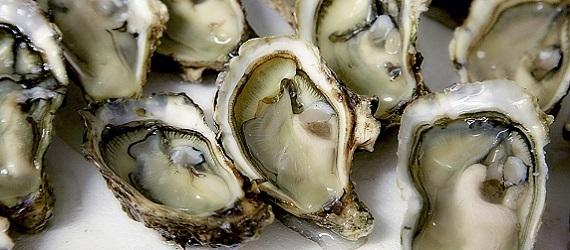 gourmet-oysters-food-croatia