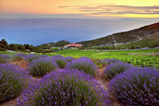lavender, hvar, hiking croatia coast